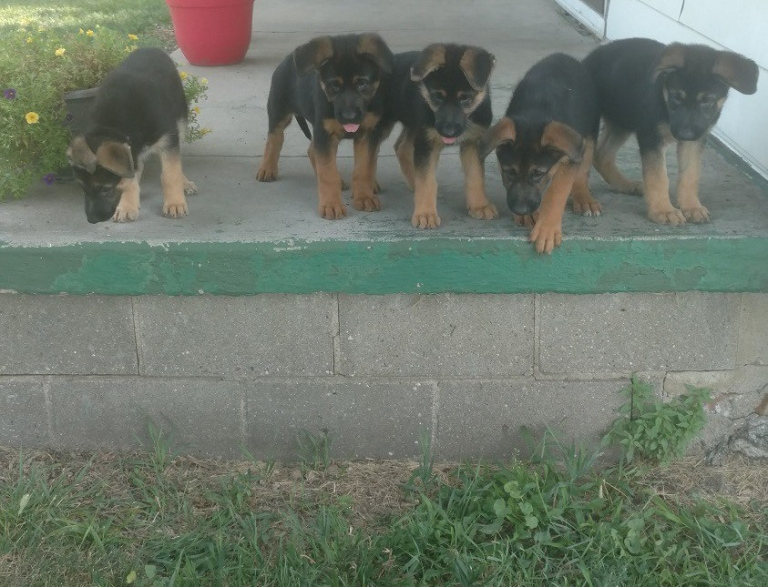 A Litter ready to jump August 12, 2018
